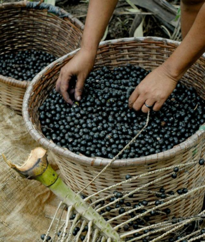 Akai bobice 30 odličnih namirnica za zdravu kožu (1.deo)