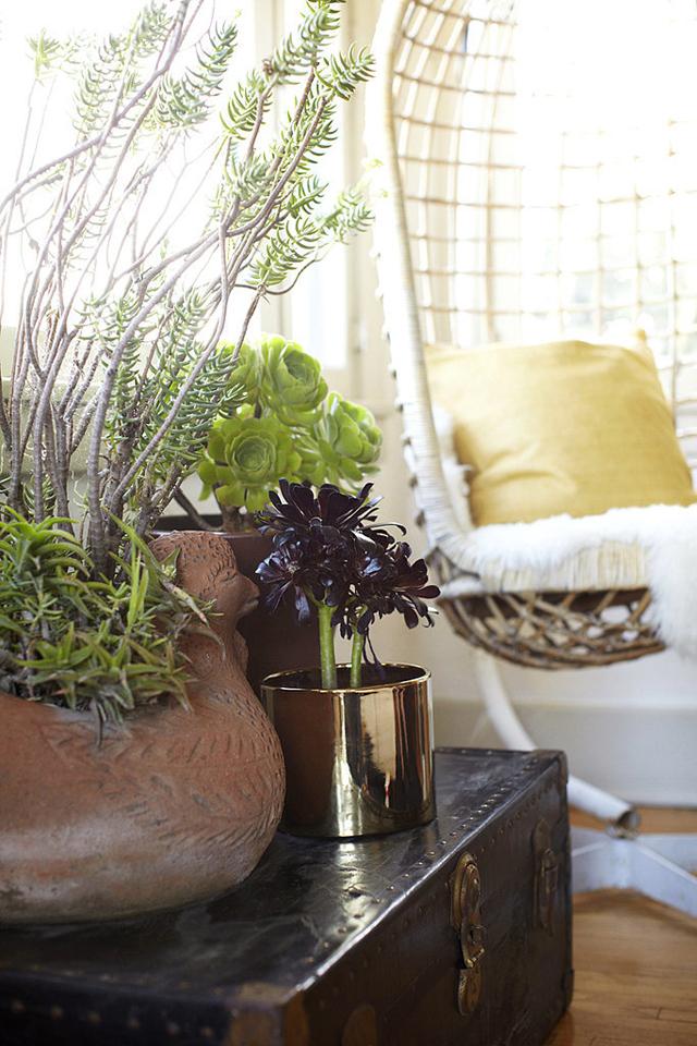 Solution Low Maintenance Plants 1 Sedam smrtnih grehova unutrašnje dekoracije