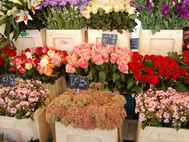 dsc 0367 Koje nam to cveće upravo cveta?