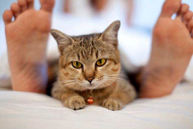 embedded cute cat Kućni ljubimci: Kako da zaštitite odeću od njihove dlake?