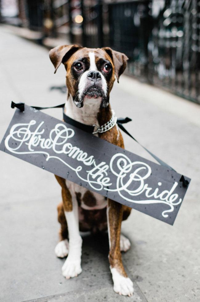 Slatki psi na venčanju 1 Slatki psi na venčanju
