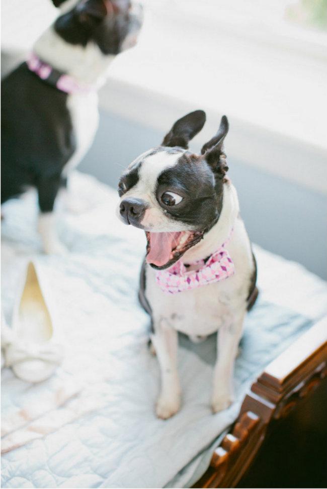 Slatki psi na venčanju 12 Slatki psi na venčanju