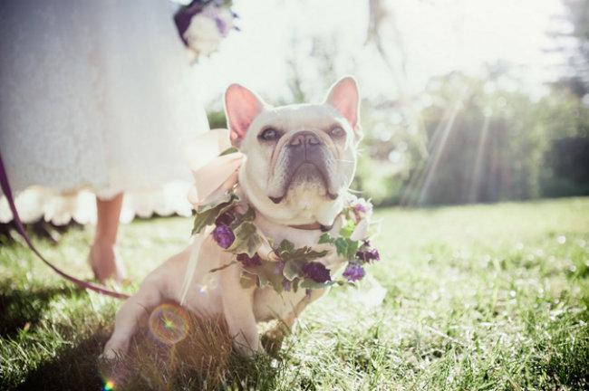 Slatki psi na venčanju 13 Slatki psi na venčanju