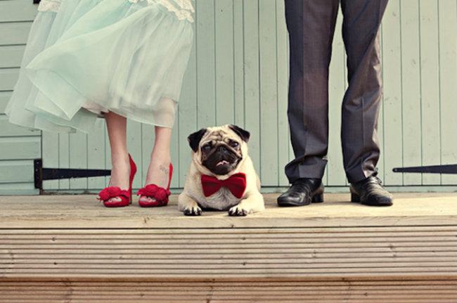 Slatki psi na venčanju 14 Slatki psi na venčanju