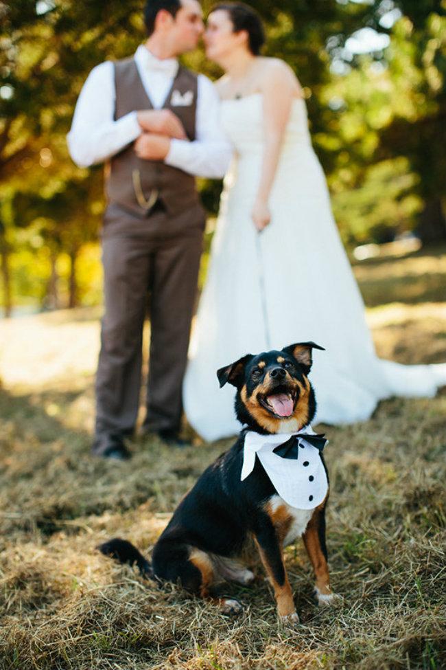 Slatki psi na venčanju 15 Slatki psi na venčanju