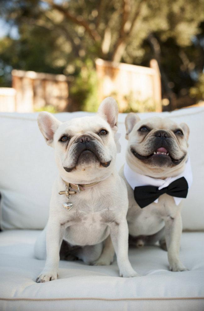 Slatki psi na venčanju 3 Slatki psi na venčanju