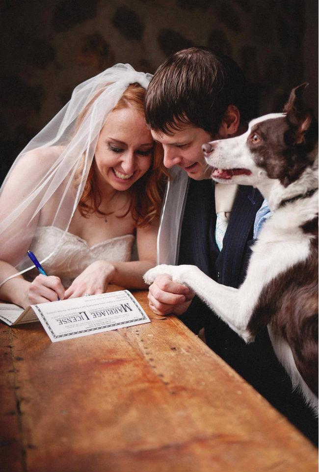 Slatki psi na venčanju 4 Slatki psi na venčanju
