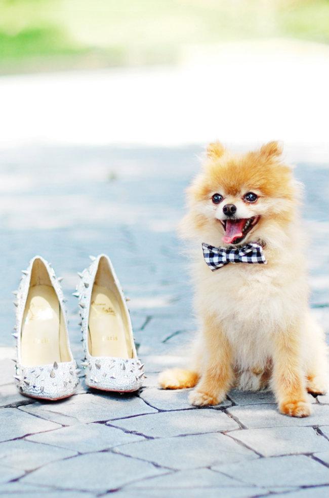 Slatki psi na venčanju 6 Slatki psi na venčanju