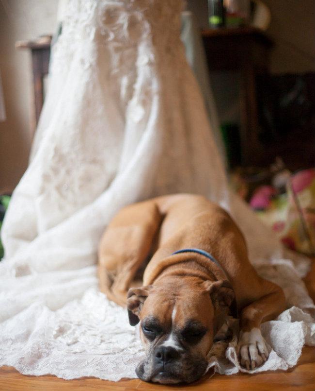 Slatki psi na venčanju 7 Slatki psi na venčanju