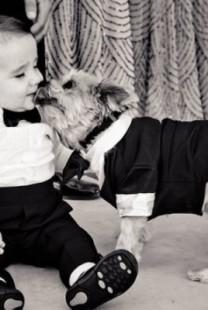 Slatki psi na venčanju