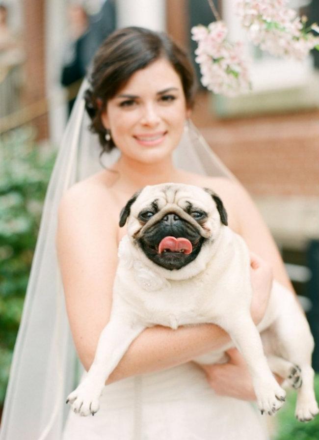 Slatki psi na venčanju Slatki psi na venčanju