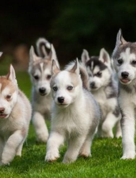 Slatka stvorenja: Preslatki psići