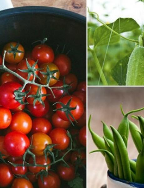 Lepota ulazi na usta: Salata od boranije, krastavaca i paradajza
