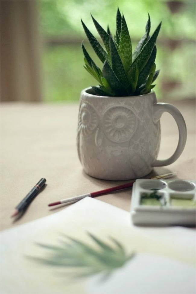 sest biljaka idealnih za negu koze aloe vera Šest biljaka idealnih za negu kože