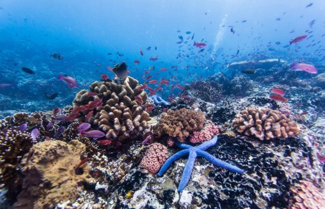 Palavan1 Medeni mesec: Najlepše ostrvo na svetu