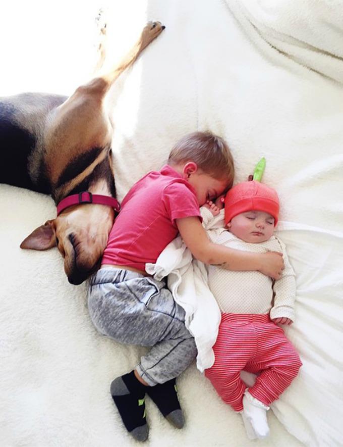 Dečak i kuca spavalice dobili pojačanje 3 Dečak i kuca spavalice, dobili pojačanje!