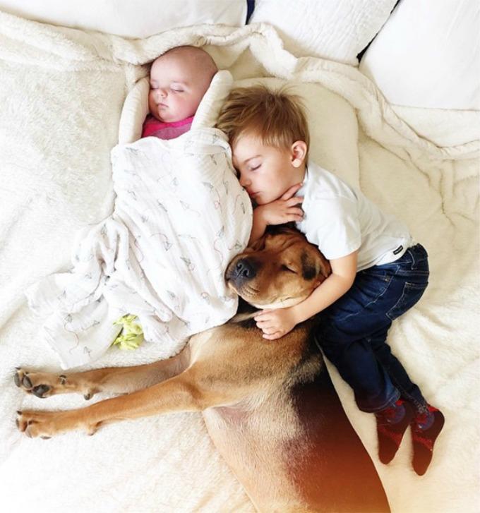 Dečak i kuca spavalice dobili pojačanje 6 Dečak i kuca spavalice, dobili pojačanje!