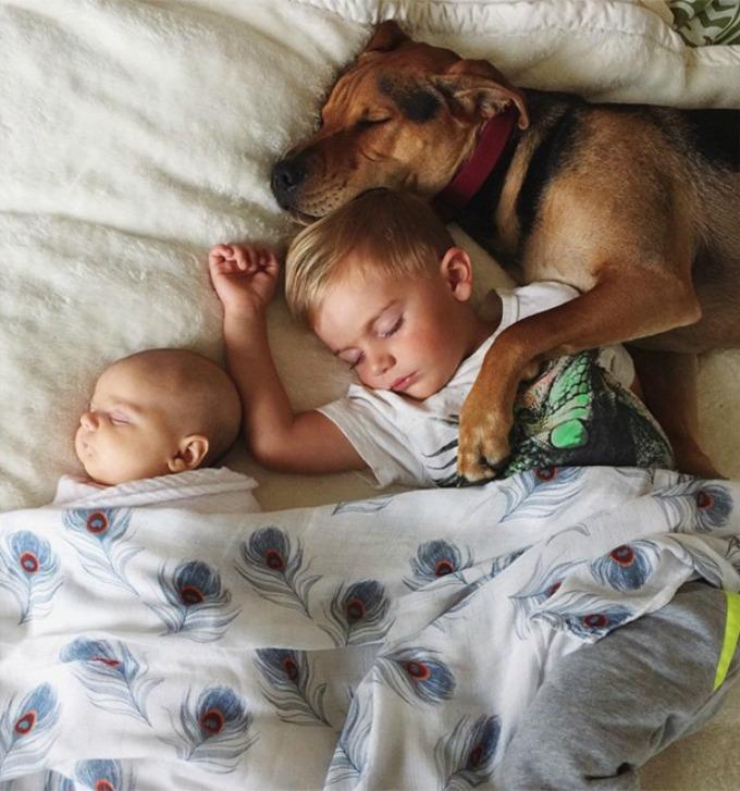 Dečak i kuca spavalice dobili pojačanje 7 Dečak i kuca spavalice, dobili pojačanje!