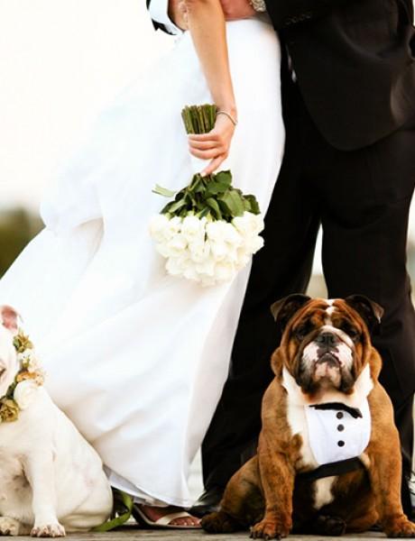 Kućni ljubimci na venčanju