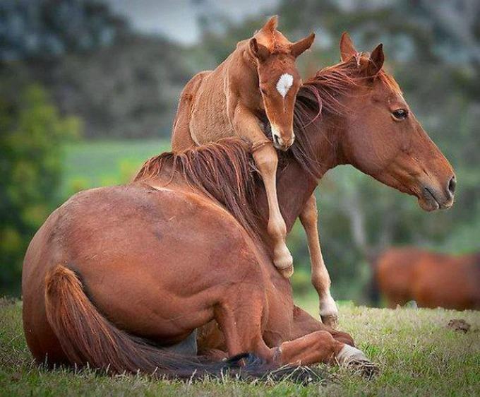 konji I životinje su brižni roditelji