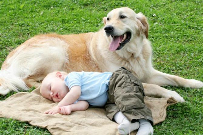 pas brine o bebi Da li vaš ljubimac može da bude najbolja dadilja?