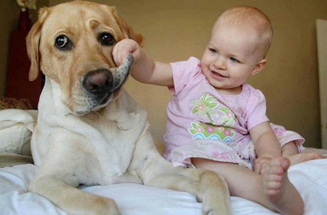pas brine o bebi1 Da li vaš ljubimac može da bude najbolja dadilja?