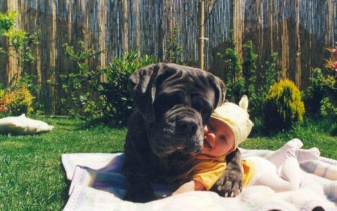 pas brine o bebi11 Da li vaš ljubimac može da bude najbolja dadilja?