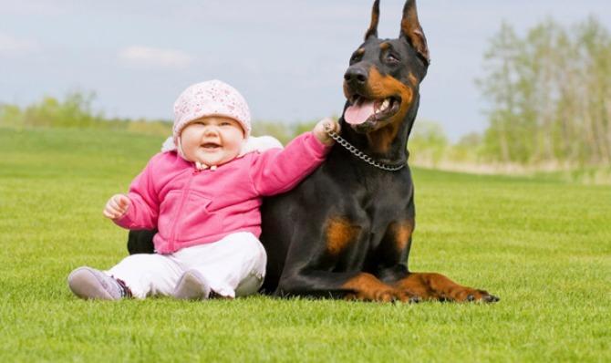 pas brine o bebi2 Da li vaš ljubimac može da bude najbolja dadilja?
