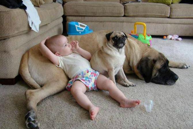 pas brine o bebi3 Da li vaš ljubimac može da bude najbolja dadilja?