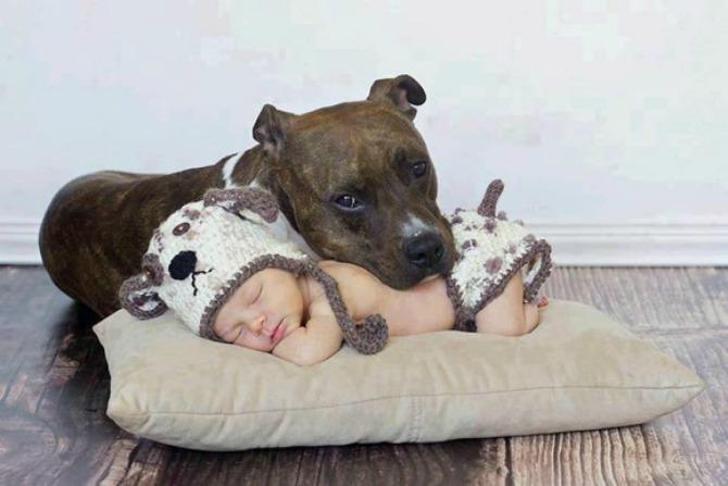 pas brine o bebi4 Da li vaš ljubimac može da bude najbolja dadilja?
