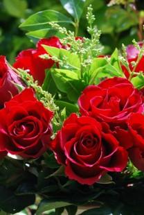 Crvene ruže kao glavna dekoracija na venčanju