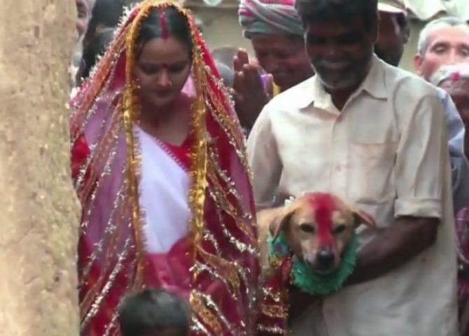 indijku udali za psa I ovo je deo tradicije    Indijku udali za psa!