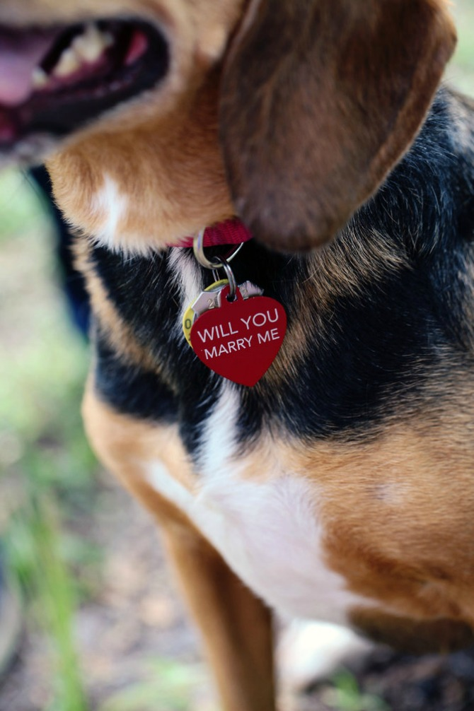 zaprosi je uz pomoć psa11 Zaprosi je uz pomoć...psa!