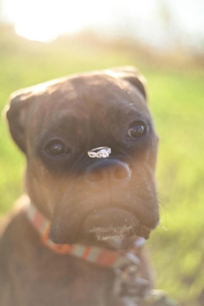 zaprosi je uz pomoć psa2 Zaprosi je uz pomoć...psa!
