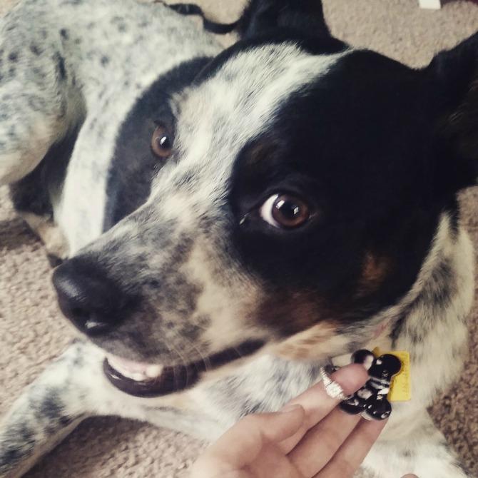 zaprosi je uz pomoć psa4 Zaprosi je uz pomoć...psa!