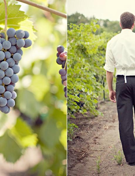 Vinograd kao savršena lokacija za venčanje