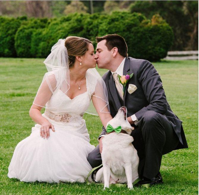 pis na vencanju Ovi psi potpuno su zasenili mladence