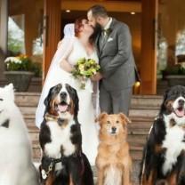 Venčanje na kome su četiri psa glavni gosti