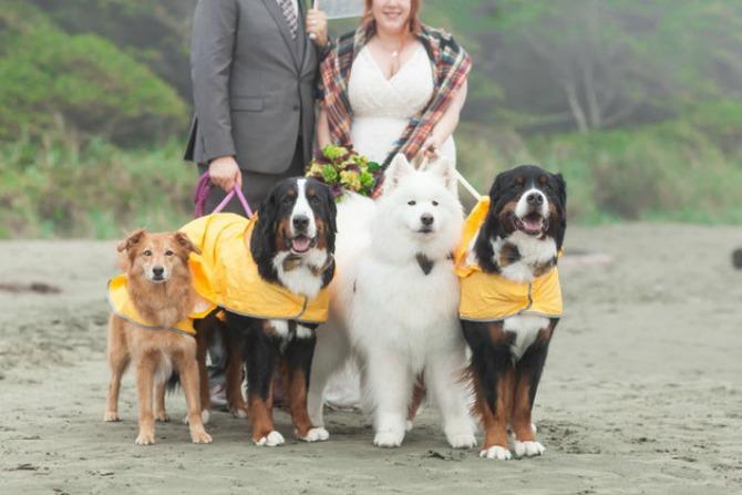 psi vencanje Venčanje na kome su četiri psa glavni gosti