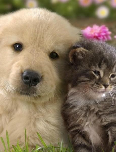 Pas ili mačka – ko je bolji LJUBIMAC za dete